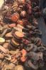 求购:大量回收手拉葫芦 电动环链 千斤顶 轴承
