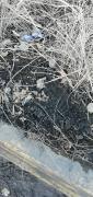 陕西安康出售铁精粉400-500吨